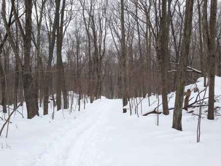 snow covered trails